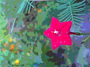 Padre Art Photos - Cypress Vine Blossom by Padre Art