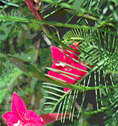 Padre Art Photos - Cypress Vine Flowers and Foliage by Padre Art