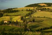 Wheatfields Photo Prints - Cypresses on hillside Tuscany Italy Print by Abhi Ganju