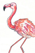 Flamingo Drawings - Da Flamingo by Michael Mooney