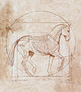 Horse Sketch Framed Prints - da Vinci Horse in Piaffe Framed Print by Catherine Twomey