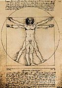 Leonardo Sketch Prints - Da Vinci Rule Of Proportions Print by Science Source