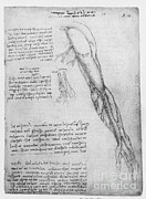 Leonardo Sketch Prints - Da Vinci Superficial Vessels Of The Arm Print by Science Source