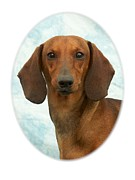 Dachshund Art Digital Art - Dachshund 365 by Larry Matthews