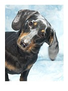 Dachshund Art Digital Art - Dachshund 441 by Larry Matthews