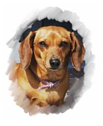 Dachshund Digital Art Framed Prints - Dachshund 740 Framed Print by Larry Matthews