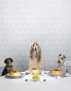 Dining Table Posters - Dachshund, Afghan Hound, And Wire-haired Terrier Sitting Around Dinner Table Poster by Catherine Ledner