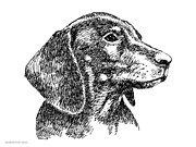 Clip Drawings Prints - Dachshund-Drawing-2 Print by Gordon Punt
