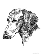 Clip Drawings Prints - Dachshund-Drawing Print by Gordon Punt