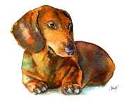 Dachshund Art Paintings - Dachshund Puppy by Christy  Freeman
