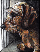 Dachshund Art Paintings - Dachshund Wiredhair looking out window by Christas Designs