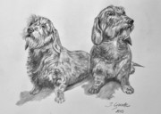 Puppies Drawings Posters - Dachshunds Poster by Jana Goode