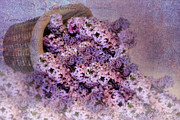 Lilacs Photos - Daddys Lilacs Series II by Kathy Jennings
