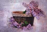 Basket Photos - Daddys Lilacs Series V by Kathy Jennings