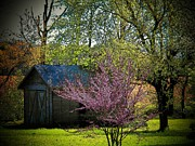 Red Bud Trees Posters - Daddys Old Shed in the Spring Poster by Joyce L Kimble