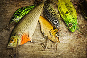 Artificial Lure Posters - Dads Fishing Crankbaits Poster by Randall Nyhof
