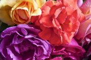 Colorful Roses Photos - Dads Roses by Gwyn Newcombe