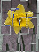 Tiles Framed Prints - Daffodil 1 Framed Print by Tim Allen