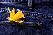 Casual Blue Jeans Prints - Daffodil and Blue Jeans Print by Mark Duffy