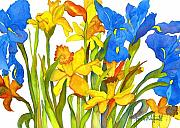 Daffodil Painting Framed Prints - Daffodil and Iris Framed Print by Jan  Porterfield