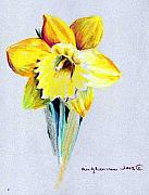 Mindy Newman Framed Prints - Daffodil Framed Print by Mindy Newman