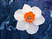 Mothers Day Art - Daffodill in Blue by Jim  Darnall