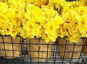 Baskets Photo Originals - Daffodils at the Flower Market by Marsha Heiken