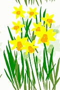 Saint David Posters - Daffodils Drawing Poster by Barbara Moignard