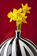 Daffodils Framed Prints - Daffodils Framed Print by Garry Gay
