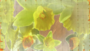 Daffy Daffodils Print by Debra     Vatalaro