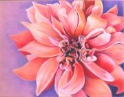 Bloosom Prints - Dahlia 2 Print by Phyllis Howard