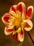 Photoart Photos - Dahlia Artwork by Lutz Baar