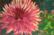 Flower Blooms Pastels Prints - Dahlia Fushcia Print by Mary McInnis