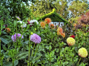 Garden Flowers Photo Originals - Dahlia Garden 2 by Lawrence Christopher
