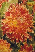 Collin Edler - Dahlia in Full Glory