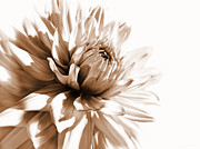 Umber Metal Prints - Dahlia Sepial Flower Metal Print by Jennie Marie Schell