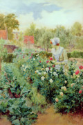 Picking Flowers Prints - Dahlias Print by Alfred Glendening