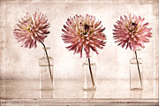 Glass Bottle Framed Prints - Dahlias Framed Print by Carol Leigh