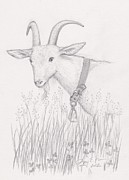 Goat Drawings - Dairy Goat by Amy Peare