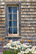 Cabin Window Digital Art Framed Prints - Daisies and Daylilies Framed Print by Verena Matthew