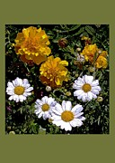 Floral Notecards Posters - Daisies and Marigolds Poster by Dale   Ford