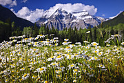 Canadian Landscape Photos - Daisies at Mount Robson by Elena Elisseeva