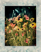 Illustrative Photo Framed Prints - Daisies Galore Framed Print by Linda Olsen