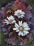 Floral Framed Prints - Daisies III Framed Print by Sam Sidders