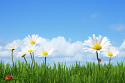 Cloud Prints - Daisies In A Summer Meadow Print by Andrew Dernie