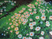 Ontario Paintings - Daisies in Bayfield by Kevin Doty