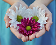 Hands Photography Photos - Daisies In Child Hands by Natalia Ganelin