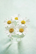 Focus On Foreground Art - Daisies by Jill Ferry