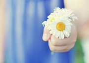 Holding Art - Daisies by Michele Quattrin; mQn Photography