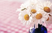 Monika Strigel Acrylic Prints - Daisies on the table Acrylic Print by Monika Strigel